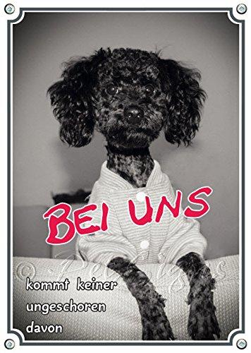 Lustiges Hundeschild mit nassem Pudel - Fotoschild - Metallschild, DIN A4
