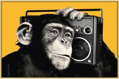Poster mit Rahmen 61 x 91,5 cm, Gold - The Chimp - boombox gerahmt - Antireflex Acrylglas