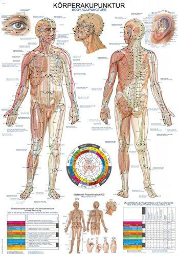 """Lehrtafel""""Körperakupunktur"""", 70x100cm"""