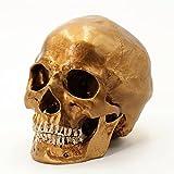 Cranstein A-524 Crâne humain, grandeur nature (Couleur: or)