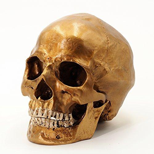 Menschlicher Schädel, lebensgroß - Totenkopf Deko (Farbe Gold)