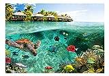 Vlies Fototapete 200×140 cm ! Top – Tapete – Wandbilder XXL – Wandbild – Bild – Fototapeten – Tapeten – Wandtapete – Wand – Natur Landschaft Meer Fish Himmel tropischen Insel Sommer c-A-0027-a-a - 5
