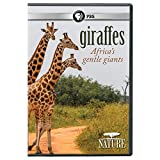NATURE: Giraffes: Africa's Gentle Giants DVD