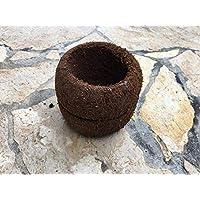Bens Jungle xaxim–Olla Zelanda 11,5x 10cm (BxH)–Ideal como macetero o decoración para su Terrario