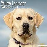 Yellow Labrador Retriever Calendar 2020