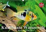 Knallbunte Wasserwelt. Die Welt der Fische (Wandkalender 2019 DIN A3 quer): Die bunte Welt der Fische und Wasserbewohner (Geburtstagskalender, 14 Seiten ) (CALVENDO Tiere)