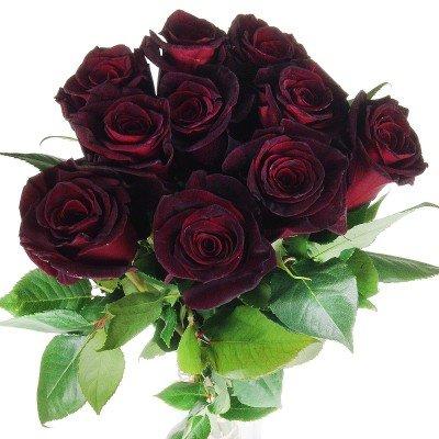 10 schwarze Rosen – langstielig und vasenfertig
