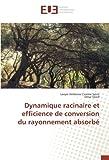 Dynamique racinaire et efficience de conversion du rayonnement absorbé