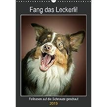 Fang das Leckerli (Wandkalender 2019 DIN A3 hoch): Fellnasen auf die Schnauze geschaut (Planer, 14 Seiten ) (CALVENDO Tiere)