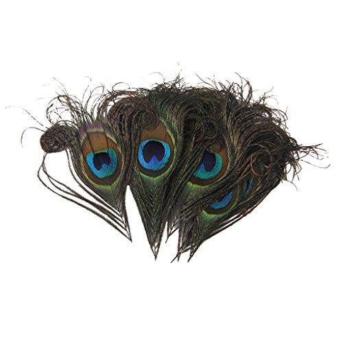 Pfau Federn für Kunsthandwerk Maske Hut 10-12cm 10 (Maske Pfau)