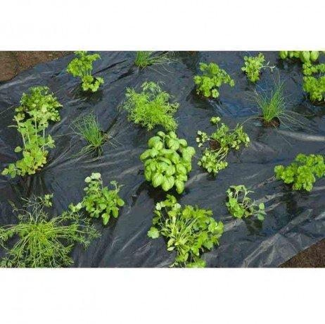 Nature Film de paillage Herbes AROMATIQUES