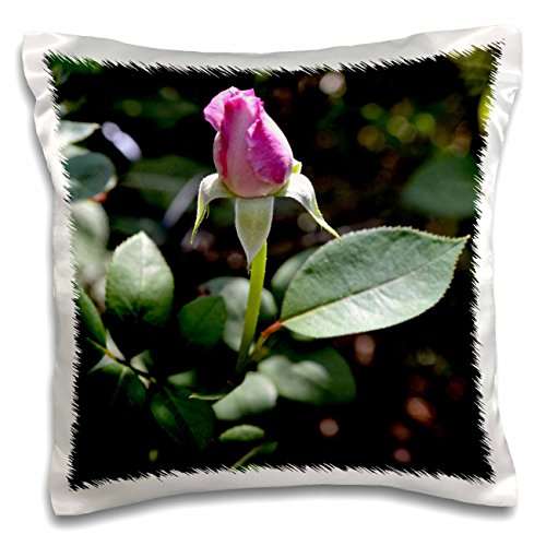 whiteoak-photography-floral-prints-light-pink-rose-bud-getting-ready-to-open-16x16-inch-pillow-case-