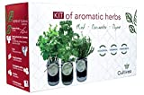 Cultivea Kit completo de hierbas - Cultive sus propias hierbas aromáticas - 100% ecológicas: semillas orgánicas, bio seeds - Decora tu hogar con un huerto urbano (Menta, Cilantro, Tomillo)