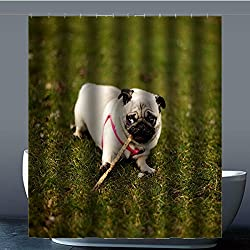 costumbre Pug Dog Perro Carlino – 100% poliéster fábrica cortina de ducha Shower Curtain, poliéster, c, 60x72(inches)