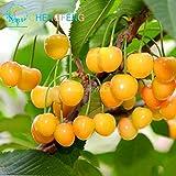 Shopmeeko 10pcs Cherry Bonsai Japanische Sakura-Frucht-Bonsai Mini Bonsai Entwurfs-Baum No-gmo groß und süß einfach wachsen schnell wachsende freie