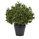 Best Nearly Natural Indoor Plants - Nearly Natural Peperomia Indoor/Outdoor UV Resistant Plant, 23