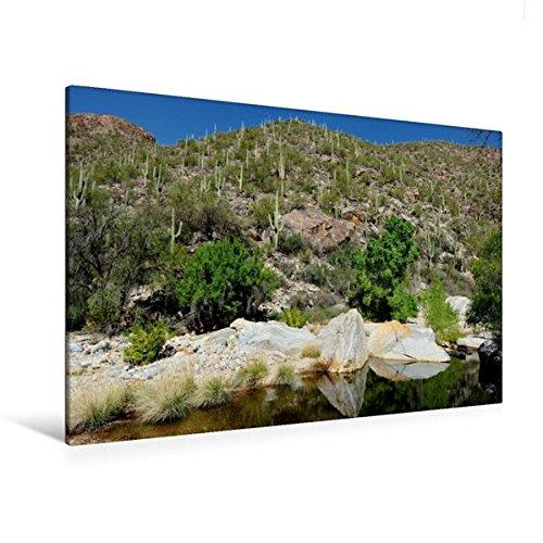 Calvendo Premium Textil-Leinwand 120 cm x 80 cm quer, Saguaro Kakteen-Landschaft, Tucson Region | Wandbild, Bild auf Keilrahmen, Fertigbild auf echter Leinwand, Leinwanddruck Natur Natur