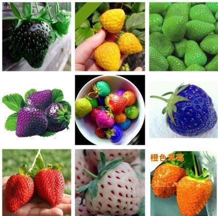 Lamdoo 100x seltene Erdbeere Berry Seed nahrhafte Früchte Pflanze frische Samen (bunt)