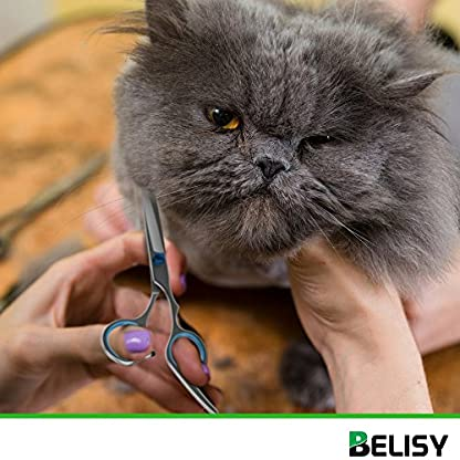 BELISY Dog Grooming Kit Scissor Set With Elegant Leather Case   2-in-1 Dog Grooming Scissors   Thinning and Straight… 3