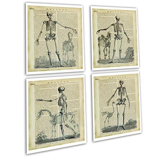 Gnosis Picture Archive Halloween Dekor-Set von 4Vintage gerahmt Anatomie Skelett Wand Art Decor Skelett bookart4a