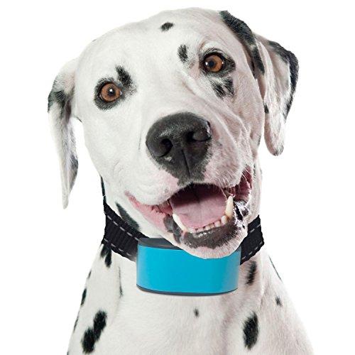 expersol petsol Anti Bark Advanced Dog Stop Bellen Halsband Intelligent Sensor, Stoppt Hunde bellen zuverlässig Sicher und menschlich. -
