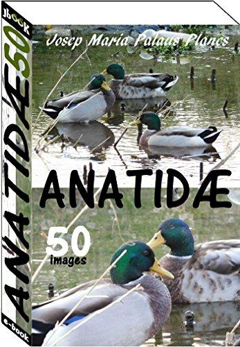Couverture du livre Anatidæ (50 images)