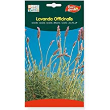 Semillas lavanda officinalis. Pack 2 sobres
