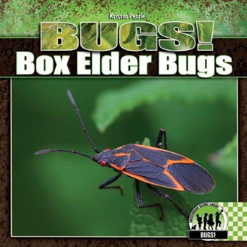 Box Elder Bugs (Elder Box Bugs)