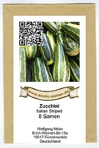 Zucchini - Italian Striped - 8 Samen von exotic-samen bei Du und dein Garten