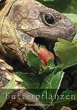 Futterpflanzen: Futterpflanzen für Schildkröten und Echsen Futterpflanzen für Europäische Schildkröten