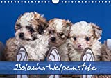 Bolonka Welpenstube (Wandkalender 2018 DIN A4 quer): Bolonka Welpen (Monatskalender, 14 Seiten ) (CALVENDO Tiere) [Kalender] [Apr 01, 2017] Wejat-Zaretzke, Gabriela