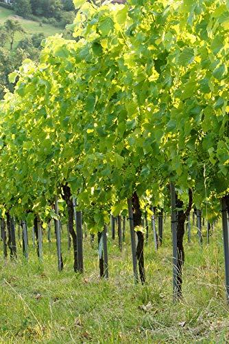 insidehome/Infrarotheizung Bildheizung SLIM/Stahlblech rahmenlos/extra schlank/mit hochwertigem Druck und Schutzlack / 600 Watt, 90x60x1,5 cm/für 10-12 m² / Motiv: Weingarten hoch