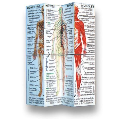 Human Body Cube Book (USA) (Würfel Körper)