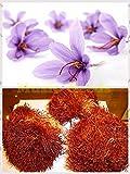 50pcs Crocus sativus Seeds Maison & Jardin Bonsai Diy Fleur Semillas Plante fleur en pot Saffron Violet Blanc