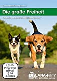 Die große Freiheit: Grundlagen nach HundeTeamSchule