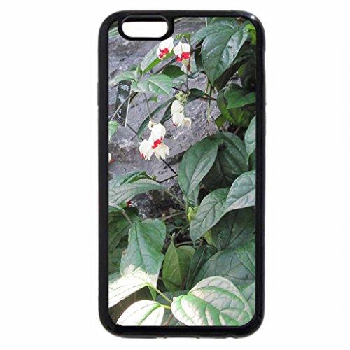 iPhone 3S/iPhone 6Coque (Noir) un beau jour à jardin d'Edmonton 14