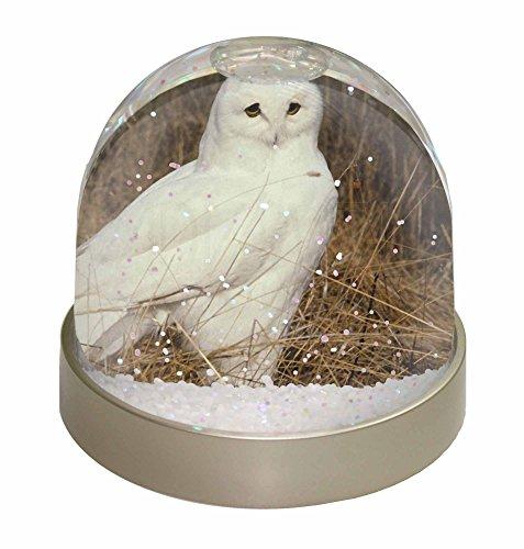 Schneekugeln Eule (Advanta White Barn Eule Schneekugel Snow Dome Geschenk, mehrfarbig, 9,2x 9,2x 8cm)