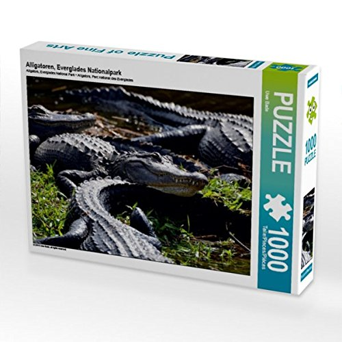 Alligatoren, Everglades Nationalpark 1000 Teile Puzzle quer -