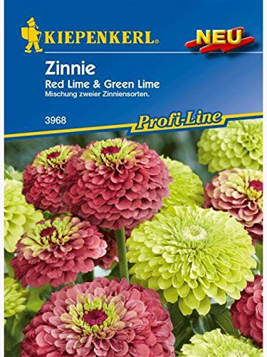 Ziniien Zinnie elegans Red Lime & Green Lime