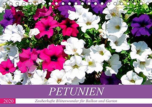 Petunien. Zauberhafte Blütenwunder für Balkon und Garten (Tischkalender 2020 DIN A5 quer)