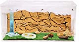 AntHouse - Ameisenfarm aus natürlichem Sand - Acryl Starter Set 20x10x10 cm (Gratis Ameisen)