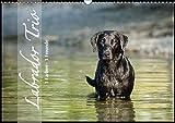Labrador Trio - 3 Farben, 3 Freunde (Wandkalender 2019 DIN A3 quer): Draußen in der Natur, 3 Hunde (Monatskalender, 14 Seiten ) (CALVENDO Tiere)