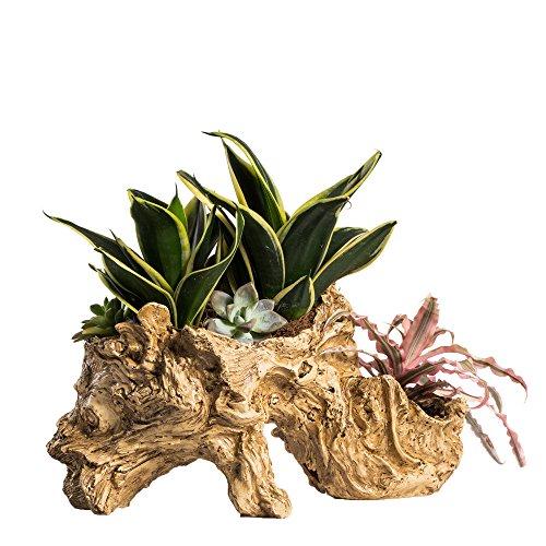 Ncyp artificielle Twisted Pot de fleurs en bois flotté Résine Arbre Sonnez Pot de fleurs Grande sculpture Succulente Air plantes multicouche irrégulière interrupteurs Out support pour décoration pas de plantes