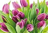 Manteles individuales ARTIPICS 'Frühlingsboten: Tulipanes', 4 pcs para happy-precio! Plástico lavable