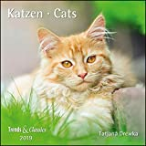 Katzen Cats 2019 - Broschürenkalender - Wandkalender - mit herausnehmbarem Poster - Format 30 x 30 cm
