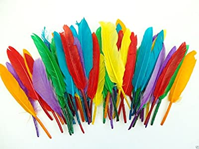 Assorted Coloured Quill Feathers - Art Crafts Collage Fly Fishing Dress Up Hats from a2bsales