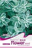 I semi 20 semi / pack Piangendo forsizia Semi Garden Pots & Planters decorazione del giardino bonsai Fiore