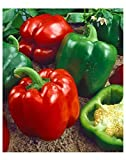 Premier Seeds Direct Pepper Sweet Yolo Wonder includes 100 Seeds