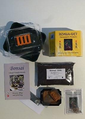 Tropica - Bonsai-Set - Taiwanesische Rotkiefer mit Samen, Keramikschale, Broschüre und Gewächshaus von Tropica bei Du und dein Garten