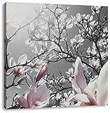 schöne Magnolie Blüten schwarz/weiß, Format: 40x40 auf Leinwand, XXL riesige Bilder fertig gerahmt mit Keilrahmen, Kunstdruck auf Wandbild mit Rahmen, günstiger als Gemälde oder Ölbild, kein Poster oder Plakat